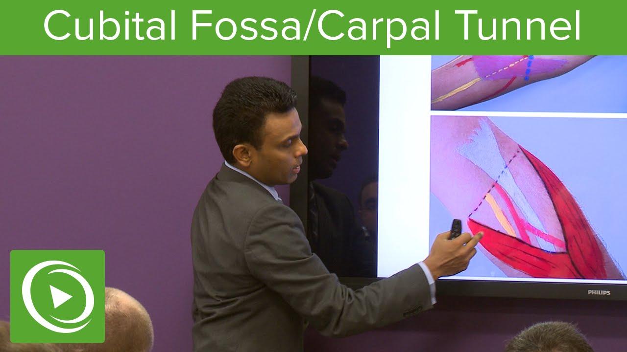 Cubital Fossa & Carpal Tunnel  – MRCS | Lecturio