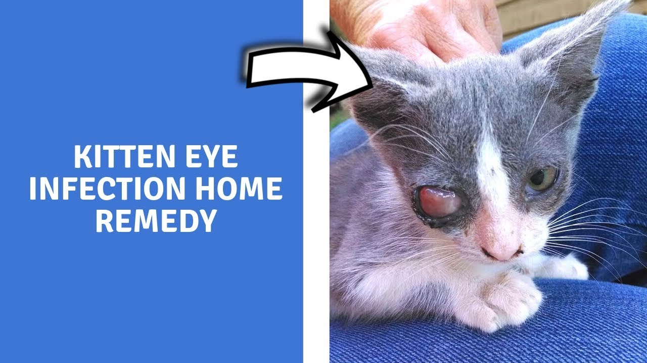 Kitten Eye Infection Home Remedy Home Remedies For Upper Respiratory Infection In Cats Youtube