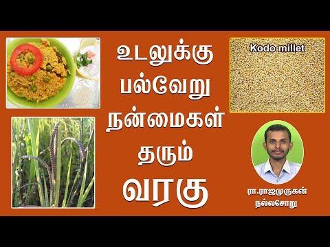 உடலுக்கு பல்வேறு நன்மைகள் தரும் வரகு அரிசி   Kodo Millet (Varagu Rice) benefits