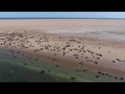 Pelican Point - Namibia - Aerial footage