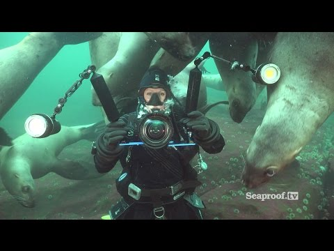Scuba diving with sea lions at Vivian Island & Hornby Island, British Columbia!