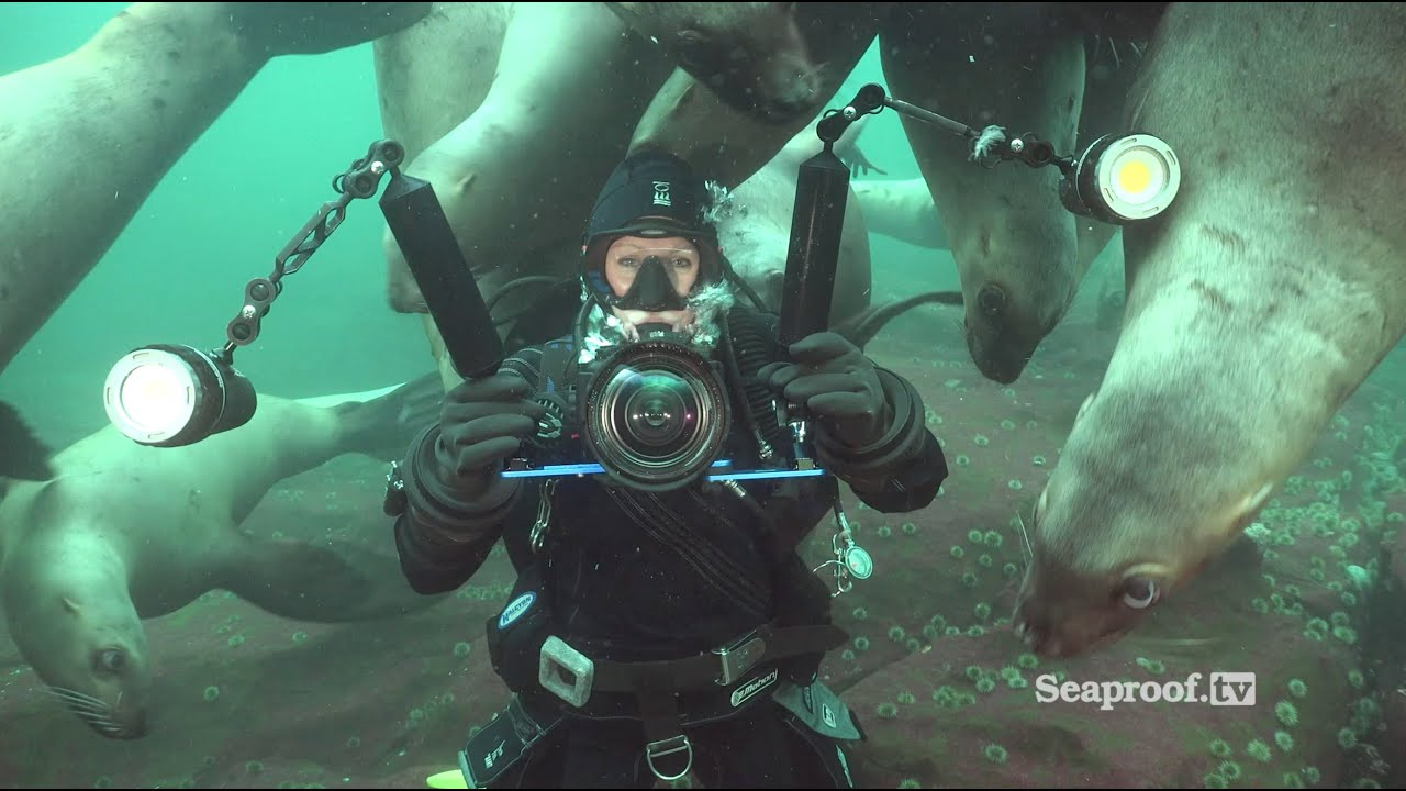 Scuba diving with sea lions at Vivian Island & Hornby Island ...