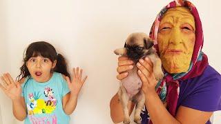Yaşlı Nine Köpeğimi Nereye Sakladı الجدة القديمة تخفي كلبي