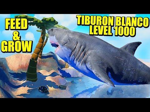 TIBURON BLANCO LEVEL 1000 - FEED AND GROW: FISH | Gameplay Español