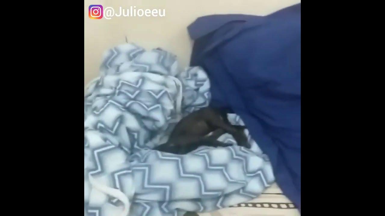 Assim são as madrugadas com o Júlio desde filhote 🙆🏻♂️ 😂