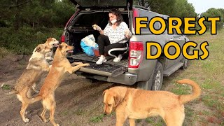 Feeding stray dogs in the forest.