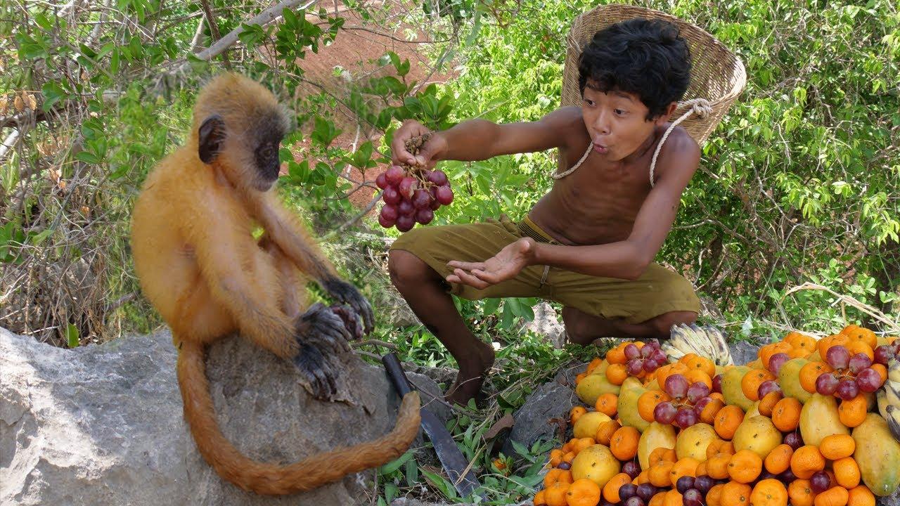 Survival Skills - Meet yellow babies monkey in the jugle