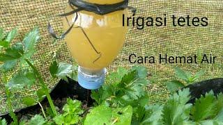Siram tanaman dengan irigasi tetes (Hemat Air)