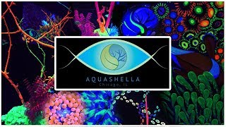 Aquashella 2018 RECAP: You've Never Seen an Aquarium Show LIKE THIS!