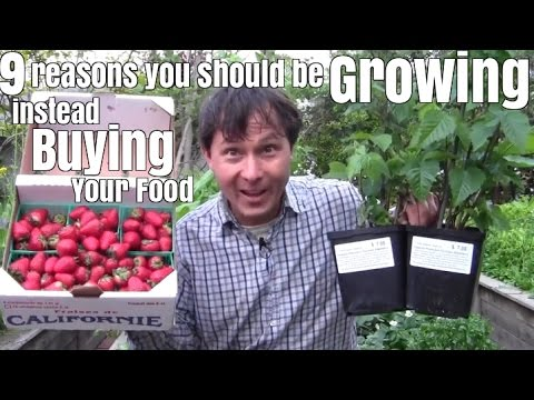 9 Reasons Why You Should be Growing Your Food instead of Buying It