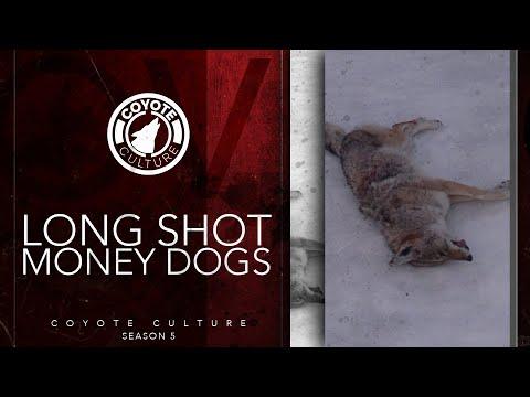 "Coyote Hunting: 5 Coyotes – CC Season 5 E14 ""Long Shot Money Dogs"""