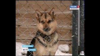 В Нарьян-Маре приют для бездомных животных построен с нарушениями