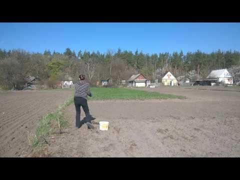 Кормовые травы и сидераты осенью на зиму - семена кормовых