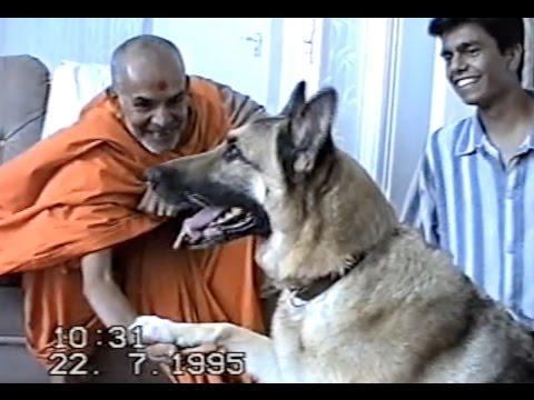 Mahant Swami Maharaj's Stay At Our House London Mandir Mahotsav July 1995   BAPS  