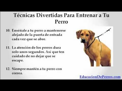 Como entrenar a un perro t cninas infalibles youtube - Como banar a un perro ...