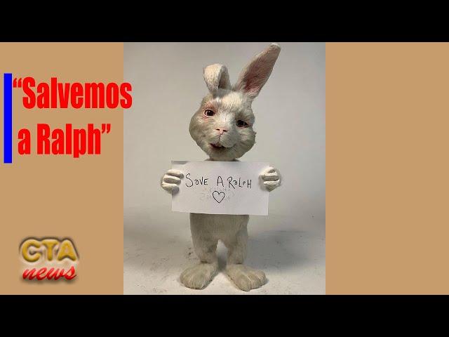 Conejo RALPH 🐰 Video VIRAL ✅ contra las pruebas COSMETICAS en animales