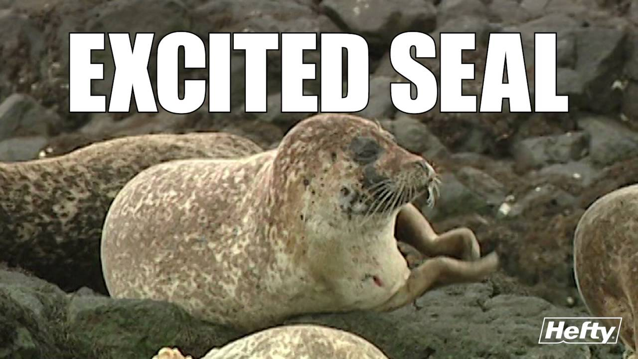 Seal Clap Youtube