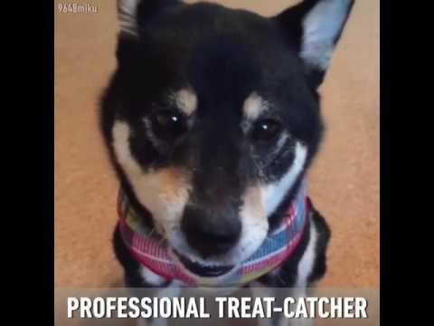 This is Miku, the fastest treat catcher.