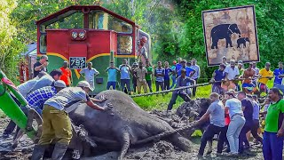 Final moments of an Elephant that met an Iron Giant (Humans didn