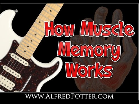 How Muscle Memory Works