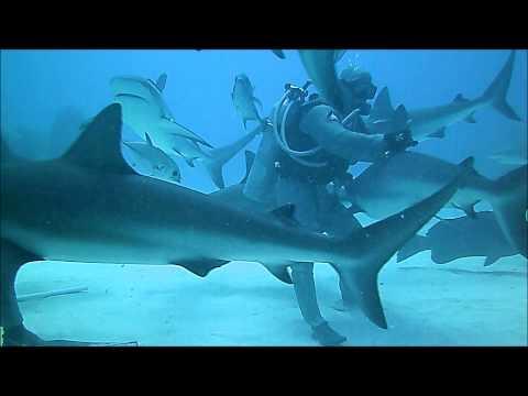 Patriot Scuba Videos | Grand Bahama Shark Dive with UNEXSO