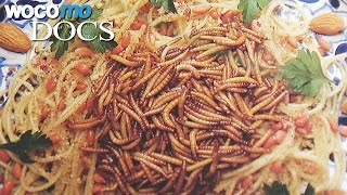 Insect Cuisine | Meat Replacement of Tomorrow