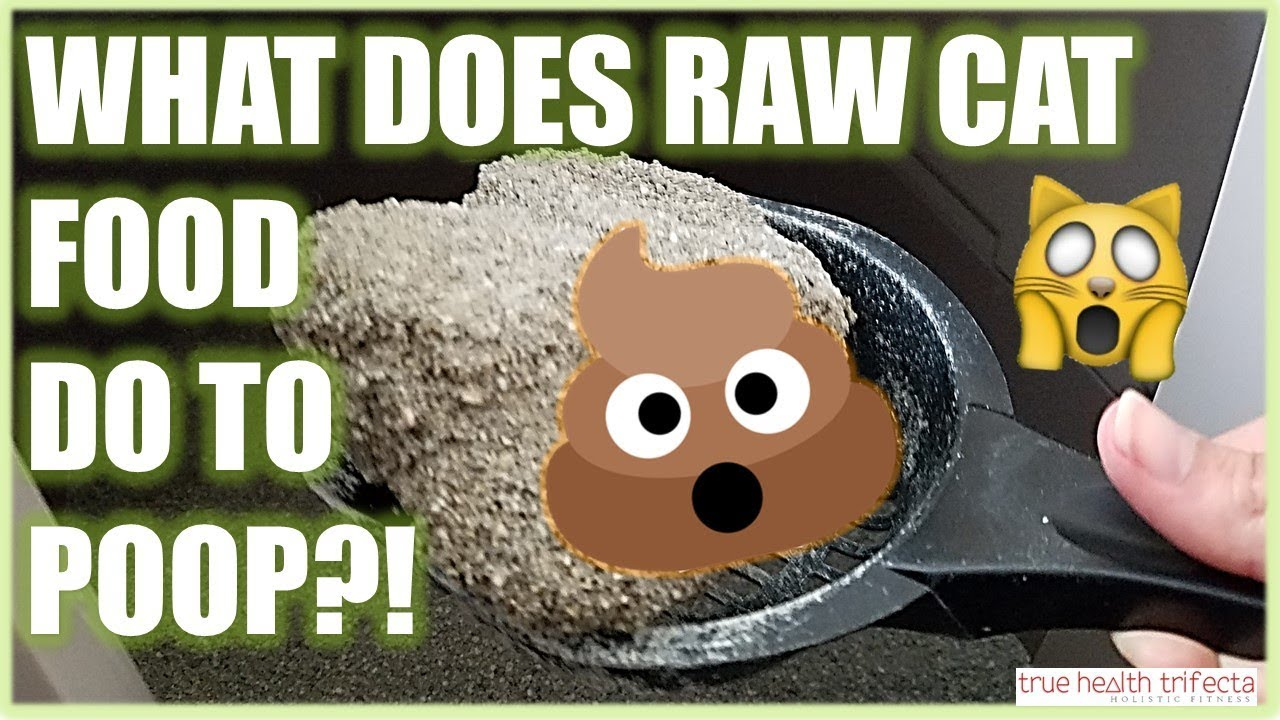 my cats poop in a raw food diet