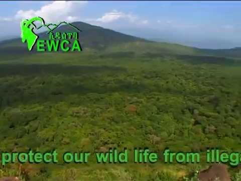 Invest on Wildlife in Ethiopia