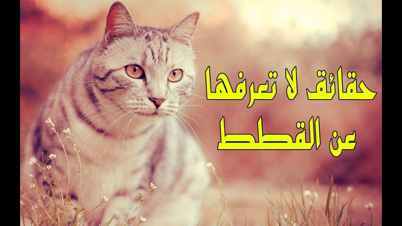 التفسير الصحيح لرؤية القطط فى المنام 2019 Hoouri التفسير