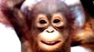 Прикольное поздравление С днем рождения от обезьянки!
