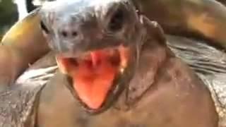 Ахахахахахаха А черепахи еще те е...ри- террористы