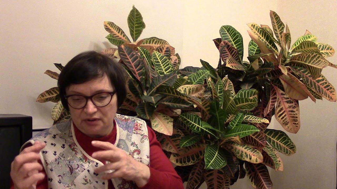 Вступительное слово. Практикующий психолог Михевнина Ольга Венедиктовна.