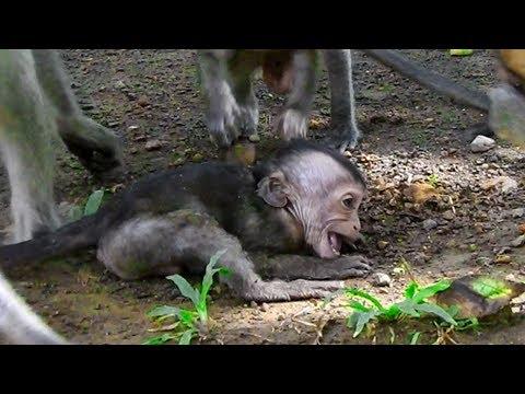 Amari Bit  Lori And Lori So Hard Crying Little Brother Hold Baby Lori To Persuade Mom Feel Angry
