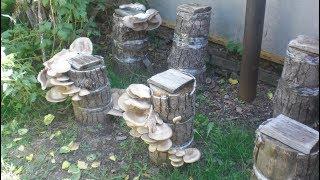 видео Как посадить грибы на огороде?