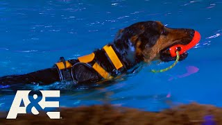 Can Crixus the Underdog Beat His K9 Competitors? | America's Top Dog (Season 1) | A&E