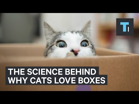 Why Cats Love Boxes So Much