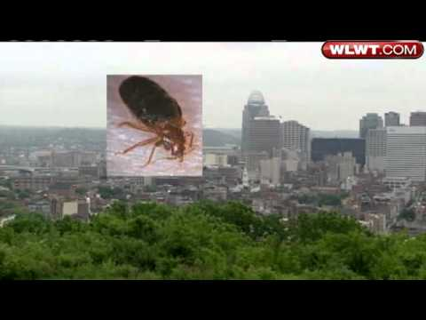Exterminators Favor Use Of Banned Chemical For Bed Bugs