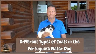 Different coat types of the portuguese water dog