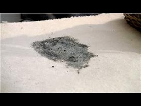 Carpet Cleaning : How to Get Mildew Out of a Carpet - YouTube
