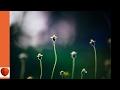 The Flower Garden 09-Outside Window-Boxes by Ida Dandridge Bennett (audiobook)