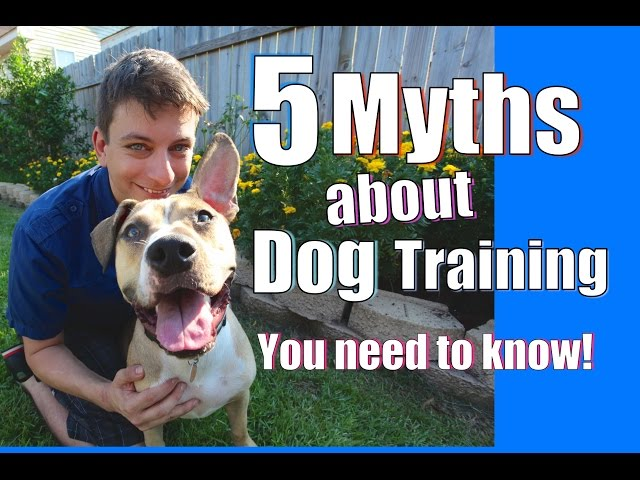 5 Strangest Dog Training Myths