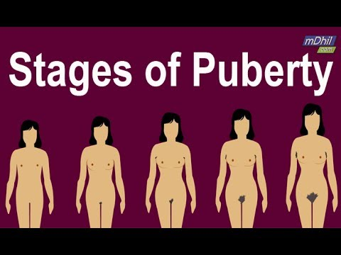 what happens in puberty for females