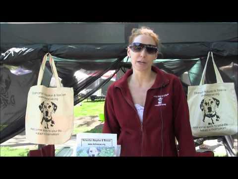 dalmatian-adoption-and-rescue