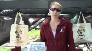 Dalmatian Adoption And Rescue