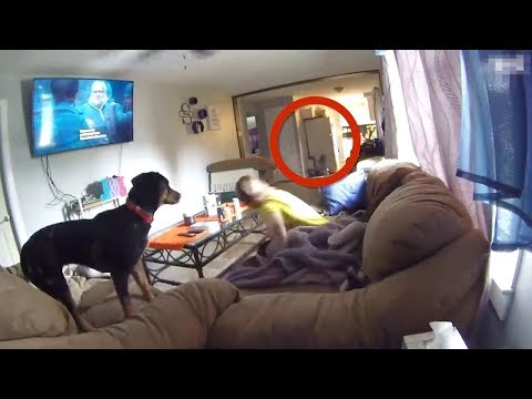 5 Собак, Которые Смогли Увидеть Нечто Необъяснимое