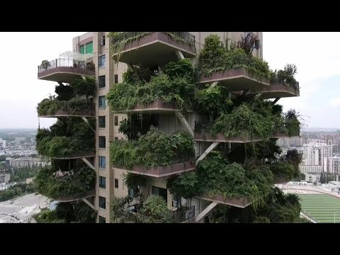 Concrete jungle: China's 'vertical forest' overrun by greenery   AFP