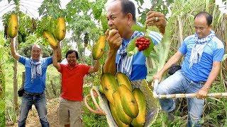 Pick Fruits at Samlot District Battambang Province | Natural Family Fruits Plantation in Cambodia