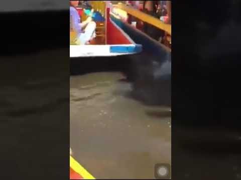 Joven cae de trajinera en Xochimilco mientras celebraba su cumpleaños y muere ahogado
