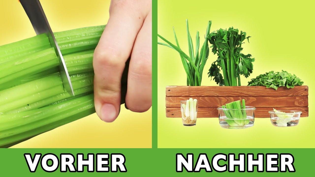 Küchenabfälle nachwachsen lassen mit diesem Tipp sprießt das Gemüse immer  wieder. Top Recycling