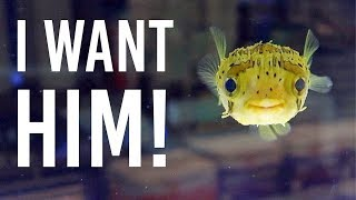 Shopping For Fish & Tank Supplies